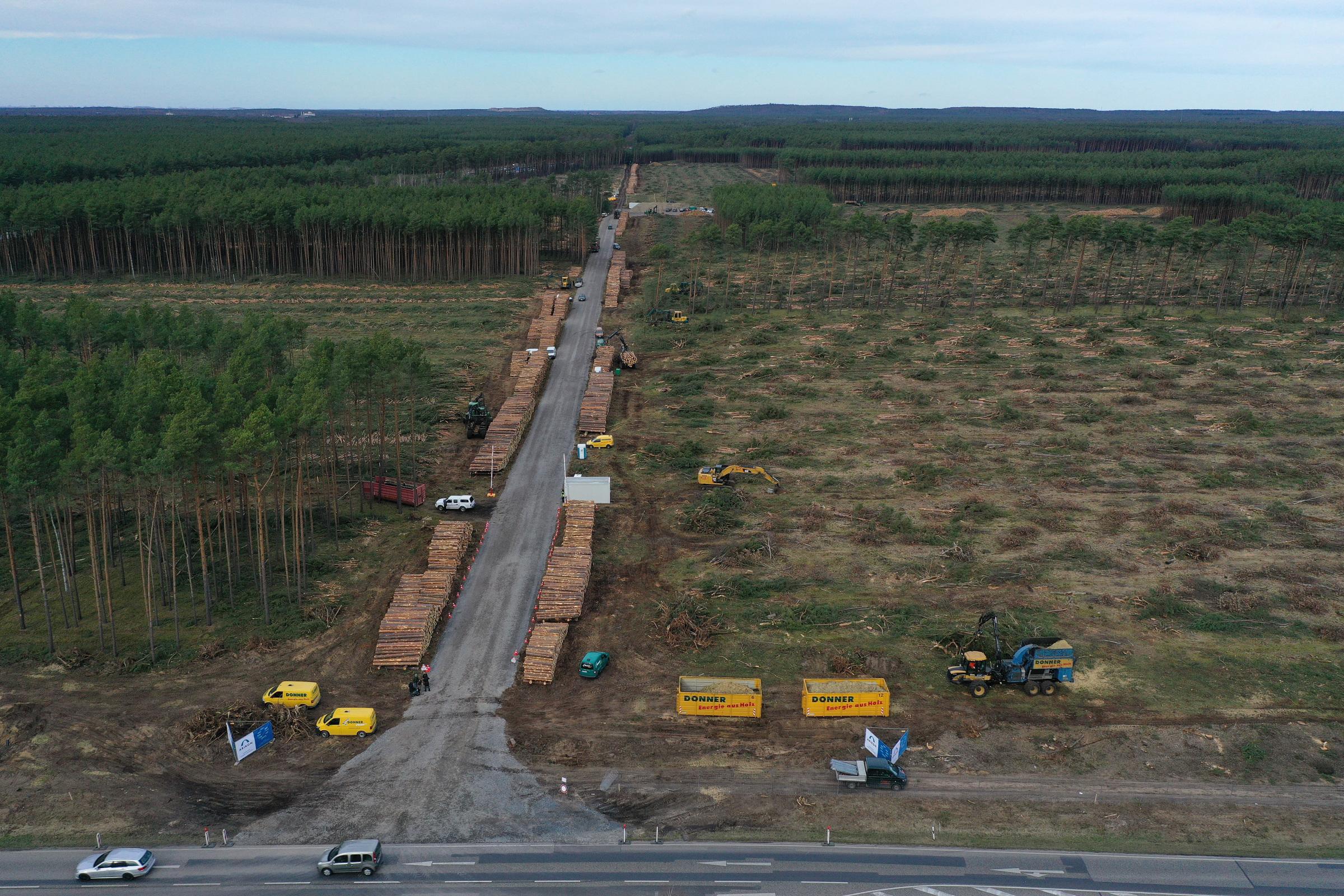 Budowa fabryki Tesli w Niemczech z problemami. Las może opóźnić inwestycję